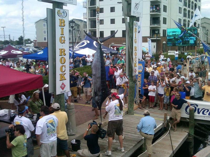 Fishin' Days takes 3rd place blue marlin in the prestigous Big Rock Blue Marlin Tournament!